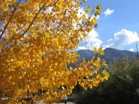 Fall2006_004