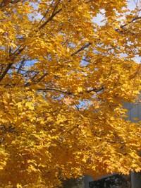 Fall2006_008